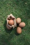 Verse eieren op een groen gras Stock Fotografie