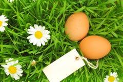 Verse eieren op gras met bloemen Royalty-vrije Stock Foto's