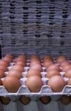 Verse eieren op kartondienbladen Royalty-vrije Stock Foto