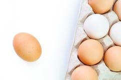 Verse eieren op witte achtergrond Royalty-vrije Stock Foto