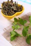 Verse en droge citroenbalsem in kom op houten lijst, herbalism royalty-vrije stock afbeeldingen