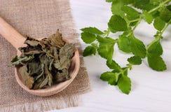 Verse en droge citroenbalsem met lepel op witte houten lijst, herbalism royalty-vrije stock fotografie
