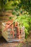 Verse en gezonde wortelen op oude houten doos Royalty-vrije Stock Afbeeldingen