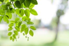 Verse en Groene Bladeren stock foto