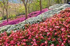 Verse en heldere kleuren van bloemen op de heuvel royalty-vrije stock fotografie