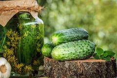 Verse en ingelegde komkommers Stock Afbeelding