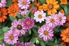Verse en kleurrijke bloemen Stock Afbeeldingen
