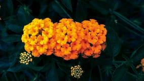 Verse en mooie gele bloemen in duotone met natuurlijke lichte achtergrond royalty-vrije stock foto's