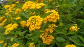 Verse en mooie gele bloemen met natuurlijke lichte achtergrond royalty-vrije stock afbeeldingen