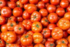 Verse en rijpe tomaten Royalty-vrije Stock Afbeelding