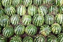 Verse en rijpe watermeloenen Royalty-vrije Stock Afbeeldingen