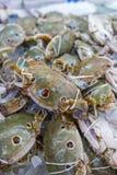 Verse en ruwe drie-VLEK ZWEMMENDE KRAB in zeevruchtenmarkt Stock Afbeeldingen