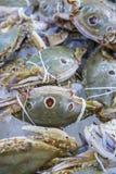 Verse en ruwe drie-VLEK ZWEMMENDE KRAB in zeevruchtenmarkt Royalty-vrije Stock Foto's