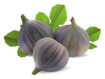 Verse fig. Stock Foto