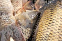 Verse fishe in een markt Stock Afbeeldingen