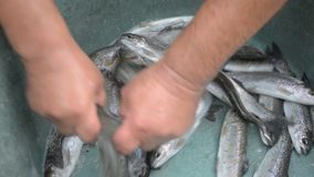 Verse forel stock video