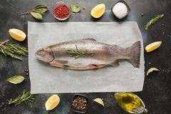 Verse forel met kruiden, kruiden op grijs Gezond voedsel Het koken concept royalty-vrije stock foto