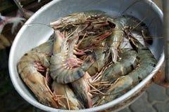 Verse garnalen in kom Vissen en zeevruchtenmarkt in Sri Lanka royalty-vrije stock afbeelding