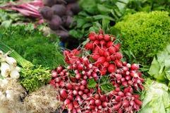 Verse geassorteerde groenten en kruiden Royalty-vrije Stock Foto's