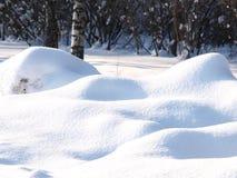 Verse gedreven sneeuw in de winterbos stock afbeelding