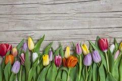 Verse gekleurde tulpen voor een houten achtergrond Royalty-vrije Stock Foto