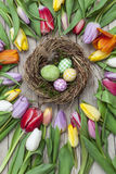 Verse gekleurde tulpen voor een houten achtergrond Royalty-vrije Stock Afbeeldingen