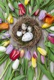 Verse gekleurde tulpen voor een houten achtergrond Stock Foto's