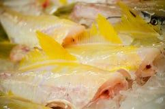 Verse gele huid van de vissen die van het leerjasje op ijs bij een vissenmarkt bevriezen stock foto's