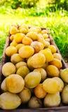 Verse Gele pruimen Rijpe vruchten in een houten doos in de zomertuin royalty-vrije stock afbeeldingen