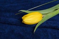 Verse gele tulpen Royalty-vrije Stock Foto's