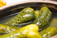Verse gemarineerde komkommers in kleischotel Royalty-vrije Stock Foto's
