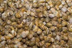 Verse geoogste slakken bij de lokale bazaar van de voedselmarkt Stock Foto