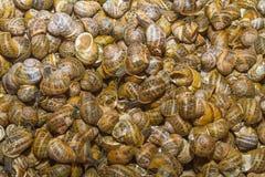 Verse geoogste slakken bij de lokale bazaar van de voedselmarkt Royalty-vrije Stock Afbeeldingen