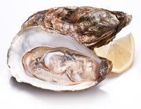 Verse geopende oester en citroenplak Royalty-vrije Stock Afbeeldingen