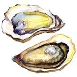 Verse geopende oester op witte achtergrond Stock Afbeelding