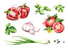 Verse geplaatste groenten en kruiden Waterverfhand getrokken die illustratie, op witte achtergrond wordt geïsoleerd stock illustratie