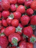 Verse Geplukte Aardbeien Stock Foto's