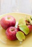 Verse geplukte appelen op een plaat Royalty-vrije Stock Afbeeldingen