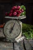 Verse geplukte radijzen en wortelen Royalty-vrije Stock Afbeeldingen