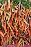 Verse geplukte wortelen Royalty-vrije Stock Afbeelding