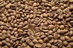 Verse geroosterde koffiebonen Royalty-vrije Stock Foto