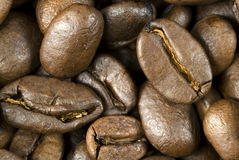 Verse geroosterde koffiebonen Stock Fotografie