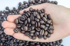 Verse geroosterde koffiebonen in handen Royalty-vrije Stock Afbeelding