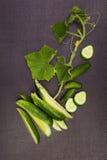 Verse Gesneden Komkommers Royalty-vrije Stock Foto