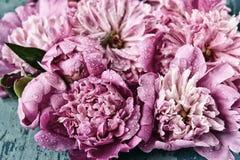 Verse gevoelige roze pioenenwijnoogst royalty-vrije stock afbeelding