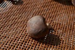 Verse gezonde bruine paddestoelen Stock Afbeeldingen