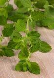 Verse gezonde citroenbalsem op houten lijst, herbalism stock foto