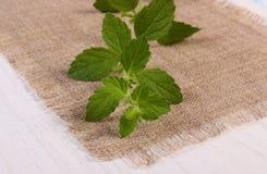 Verse gezonde citroenbalsem op witte houten lijst, herbalism royalty-vrije stock foto's