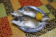 Verse gouden vissen Stock Foto's