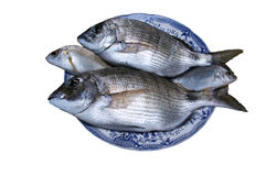 Verse gouden vissen Royalty-vrije Stock Foto